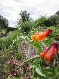 Heath Garden (4)