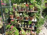 Open Gardens Pershore 024