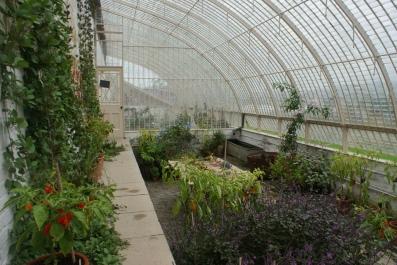 Restored Glasshouse - Wildegoose Nursery