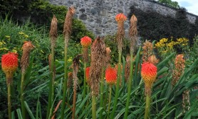 Bodnant Gardens 2
