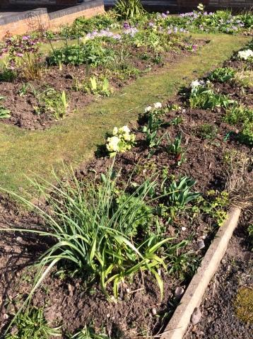 Heathers garden 2